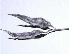 Resultado de imagem para desenhos realista folhas