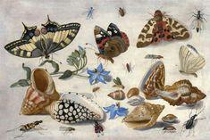 """""""Butterflies, shells & insects"""" by Jan van Kessel"""