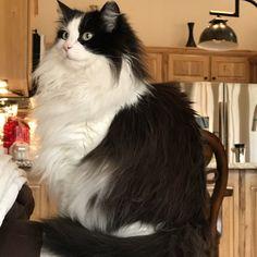 Modern Cat's Photo Contest - Jubi Gray