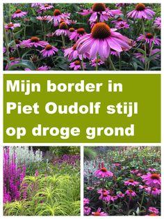 Tuinieren op zandgrond: Een border in Piet Oudolf stijl op droge grond Small Gardens, Outdoor Gardens, Garden Mural, Gardening Tips, Container Gardening, Garden Borders, My Secret Garden, Garden Care, Small Trees