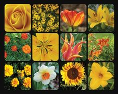 Golden Blooms 1000 | Piece Jigsaw Puzzle