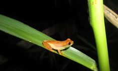 Even more amphibians are endangered than we thought Amphibians, Mammals, Vulnerable Species, University Of Sheffield, Protected Species, Ecology, Assessment, Geography, Birds