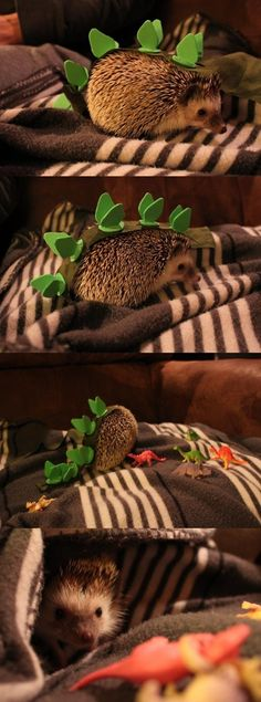 Hedgehoggiesaurus << I'll leave you to your deductions... *dies laughing*