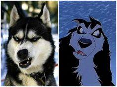 Животные, которые похожи на героев из мультфильмов
