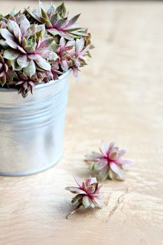 How to Grow Succulents From Cuttings Propogate Succulents, Succulent Cuttings, Succulents Garden, Lawn And Garden, Home And Garden, Diy Craft Projects, Diy Crafts, Gardening Tips, Garden Ideas