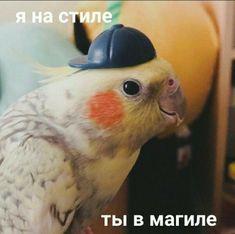 Cute Bird Pictures Parrots 19 New Ideas Bird Pictures, Funny Animal Pictures, Funny Animals, Lightning Mcqueen, Insurance Humor, Car Insurance, Hello Memes, Happy Memes, Russian Memes