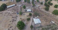 """""""L'ancien ministre de l'environnement sénégalais, Haïdar El-Ali a rendu publiques, jeudi 26 mai à Dakar, des images montrant l'un des centres névralgiques du trafic de bois de vène (pterocarpus erinaceus) entre la Casamance et la Gambie. Il s'agit d'un bois précieux utilisé en Chine pour la fabrication de meubles de luxe destinés aux nouvelles élites.""""... http://www.lemonde.fr/afrique/article/2016/05/26/un-drone-filme-le-pillage-pour-la-chine-des-dernieres-forets-du-senegal_4926989_3212.html"""