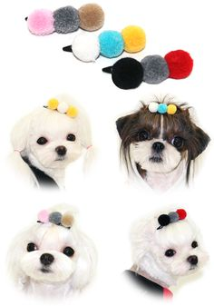 256 best salon ideas images on pinterest dog grooming business puppy zzang pom pom hair clip solutioingenieria Gallery