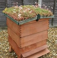 Langstroth Hive with a Green Roof. so smart!