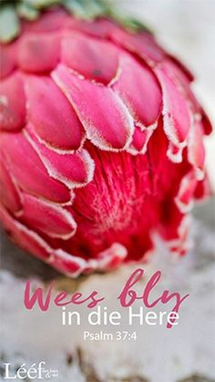 Psalm 37 4, Psalms, Protea Flower, Afrikaans Quotes, Inspirational Qoutes, Christian Messages, Happy Minds, Hart, Note To Self
