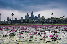 Fabulo templo de Angkor Wat. Construido en el siglo XII por el imperio Jemer es uno de los edificios mas hermosos y emblemáticos de todo el mundo.