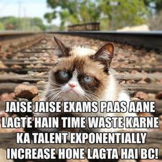 Grumpy Cat on the rail road tracks. Grumpy Cat Quotes, Funny Grumpy Cat Memes, Funny Cats, Grumpy Kitty, Funny Memes, Hilarious, Siamese Kittens, Cats And Kittens, Kitty Cats