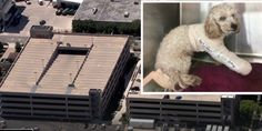 Sign: Justice for Poodles Hurled from Top of Parking Tower