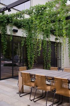 Contemporary Patio by Eckersley Garden Architecture Parthenocissus quinquefolia virginia creeper draping from pergola