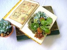 What a cute way to have plants around the house! Phillips-Barton Brown DIY Succulent Centerpiece Vintage Book Planter for the Book & Plant Lover Succulent Wedding Centerpieces, Book Centerpieces, Centerpiece Ideas, Suculentas Diy, Cactus Y Suculentas, Comment Planter, Wedding Book, Wedding Ideas, Trendy Wedding