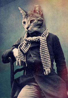 Cat in Scarf Print