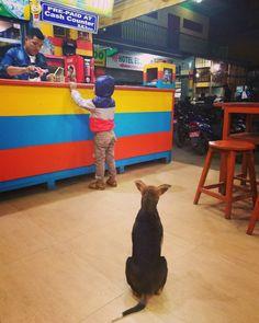 So cute instant of life #nepalilife #nepali #dog #children #Kathmandu #nepal #fastfood #restaurant