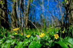 Vigyázz rám!Long-erdő természetvédelmi terület,Sárospatak környékén...