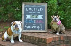 Pregnancy reveal with chalkboard and dogs (the furry children)