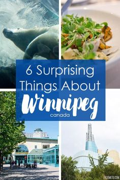 Winnipeg was such a discovery for me and I had a fantastic time. Here are six things that surprised me about Winnipeg and one that didn't. Travel Usa, Travel Tips, Visit Canada, Canada 150, Discover Canada, Canada Destinations, Canadian Travel, Time Travel, Trip Planning
