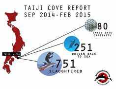 Save Japan Dolphins reports Taiji Dolphin Bottlenose Cove Catch Down By 80%  http://savejapandolphins.org/blog/post/cove-catch-of-bottlenose-dolphins-down-80