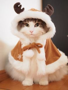 Want more Cute Cat Photos? Check out our website by clicking the photo - Adorable Cats and Cute Kittens - Katzen Bilder Cute Kittens, Kittens Meowing, I Love Cats, Crazy Cats, Cute Baby Animals, Funny Animals, Funny Cats, Animals Images, Cute Cats Photos