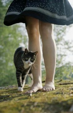 """""""There is something about the presence of a cat...that seems to take the bite out of being alone."""" ~Louis J Camuti"""