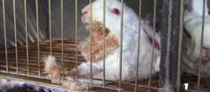"""Tell """"Galeria Kaufhof"""" to stop selling products made from angora!"""