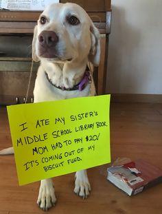 Shoot! Not the treats fund!