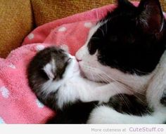 cute cats and kittens | Cat Kissing Her Kitten | CuteStuff.co - Cute Animals, Cute Pictures ...