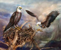 Spirit Of The Wild - Birds Of Prey - The Eagles Nest by Carol Cavalaris.The eagle's nest, so strong and so high, they sit and wait for their prey to come by. This painting is from the 'Spirit Of The Wild' series of art by Carol Cavalaris. Cross Paintings, Easy Paintings, Eagle Nest, Creation Photo, Beautiful Owl, 5d Diamond Painting, Cute Birds, Drawing Skills, Thing 1