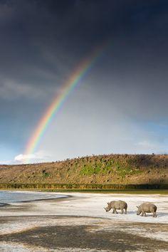 White Rhinos - Lake Nakuru National Park, Kenya (by Michael Poliza)