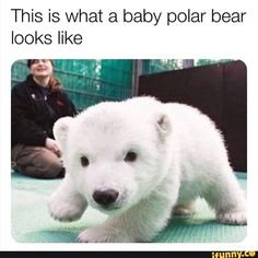 Cute Animal Memes, Cute Animal Photos, Cute Funny Animals, Funny Animal Pictures, Funny Cute, Cute Dogs, Cute Babies, Funny Pics, Like Animals