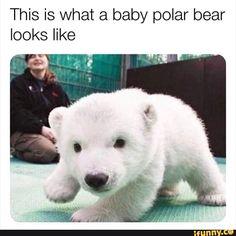 Cute Animal Memes, Cute Animal Photos, Cute Funny Animals, Funny Animal Pictures, Funny Cute, Cute Dogs, Cute Babies, Funny Pics, Like Animals
