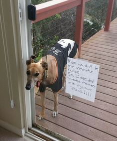 26 Shameful Events That Prove How Hard Life is With a Greyhound is part of Funny animals - Trash your alarm clock, no need for that anymore, cuz you have a Greyhound! Cute Animal Memes, Animal Jokes, Cute Funny Animals, Funny Animal Pictures, Dog Pictures, Funny Cute, Hilarious, Animal Funnies, Funny Dog Memes