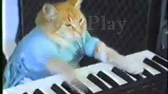 Youtube Cats The Movie