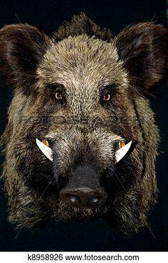 De kopieën schuilden in het bos. Maar het grootste gevaar daar waren de grote everzwijnen. Deze everzwijnen waren zeer agressief en doden dagelijks mensen in het bos. Jonas is altijd zeer alert voor everzwijnen.