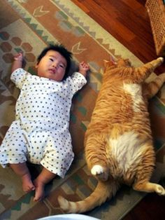 I don't know who's bigger... the baby or the cat?