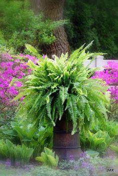My chimney pot needs bigger hair - the fern looks like it's the way to go! The foliage equivalent of Tina Turner! Ferns Garden, Love Garden, Garden Planters, Shade Garden, Dream Garden, Purple Garden, Chimney Pot Planter, Container Plants, Container Gardening