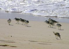 Sanderlings Oistins Barbados