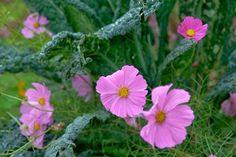 l'ortodimichelle: consociazione d'ortaggi: piante repellenti come ve...