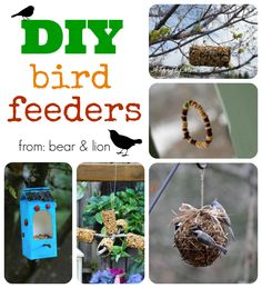 DIY bird feeder round-up! our little feathered friends will appreciate the gesture, especially during these super cold winter months. from bear & lion
