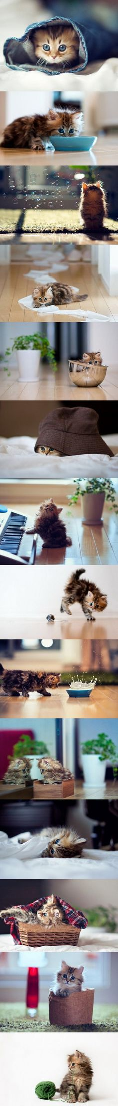 Looks just like my little Fluffy! So sweet.