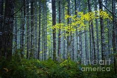 In the Woods by Belinda Greb