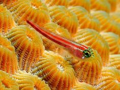 Cool Little Fish - cool, picture, little, fish