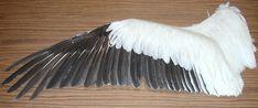 Resultado de imagem para bird wings