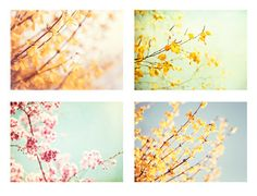 Flower Photography Set - Four 5x7 Photographs - pastel pale photos mint floral - yellow blue pink green - nursery prints nature wall art. $45.00, via Etsy.