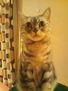 (≡´•.̫ • `≡)  #neko #cat (via yurala1)