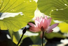 Five Mindfulness Trainings