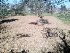 Empezamos a arar el campo